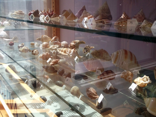 Conchologycitus: The Abe Levine Shell Collection